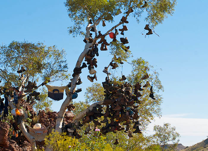 A tree with many boots and shoes thrown and hung on the branches by local Pannawannica people