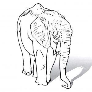 3d Trick Art Elephant Thumbnail