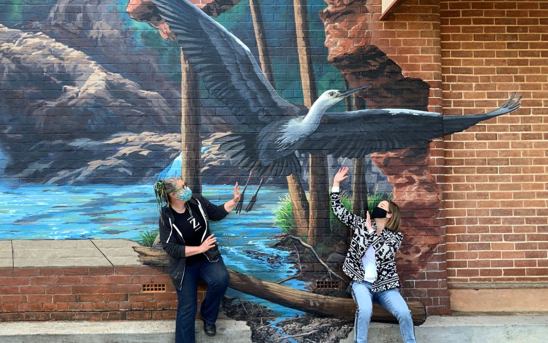 Barraba art trail explodes with birdlife and nature